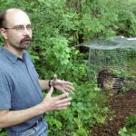 c00beard - Joe Keiper, Curator of Vertabrate Zoology and Science Director at Cleveland Museum of Natuaral History, with his black bear carcass, in the middle of Geauga County. Keiper is doing a study of the decomposition of a mammel.......................................Shot in Geuaga County, Ohio.....Shot on June 04, 2007....(Chuck Crow/The Plain Dealer)