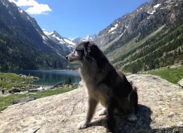 Gaube Shimmer FB Dog Trip 2016