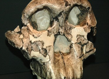 OH5 skull from Olvuvai