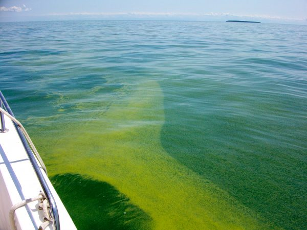An algal bloom floats alongside a ship in western Lake Erie. Current research focuses on identifying the causes of these harmful blooms and predicting when and where they will appear. Photo by Justin Chaffin.