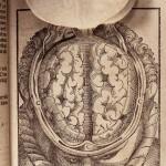 Bartisch_the brain