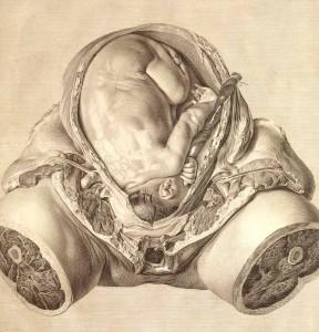 The Gravid Uterus