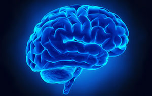 brain-feat2