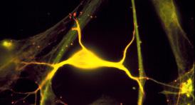 Model Cell