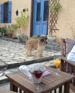 2014-09-21 19.28.37 Rooding Domaine Le Chec dog wine