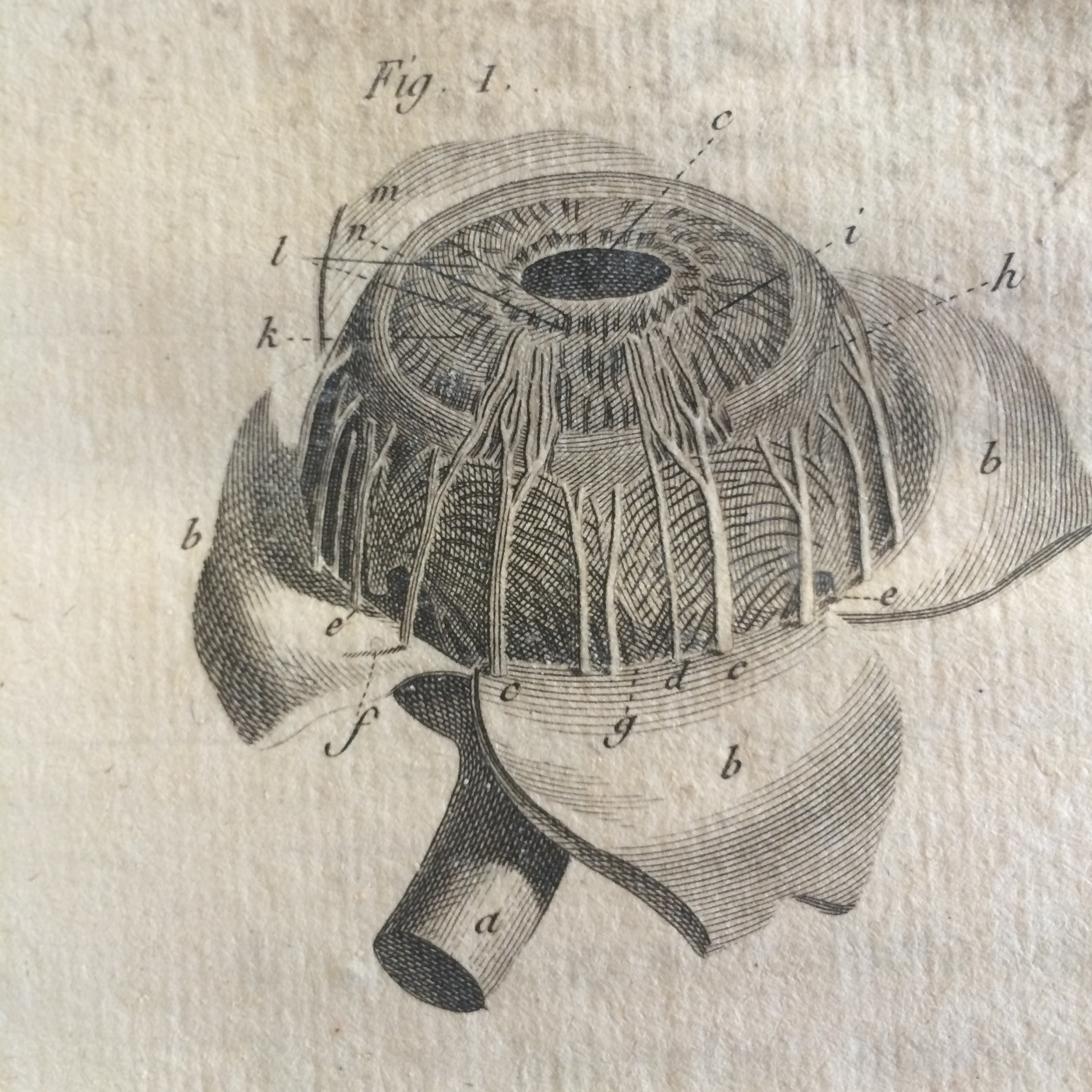 The Eye as Art: Anatomy and Vision in the 18th Century - Dittrick ...