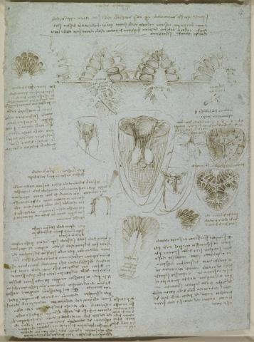 Julius Fund image