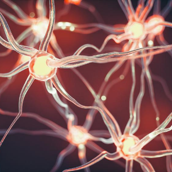 close-up photo of neurons