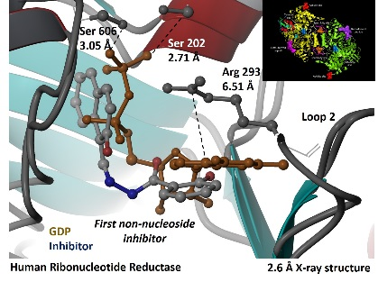 Human Ribonucleotide reductase x-ray structure image