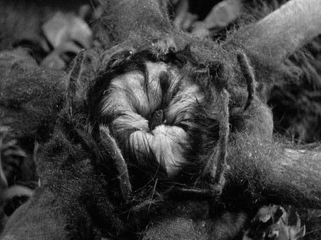 werewolf-of-london-frame-7: The Madagascar Carnalia eating a frog