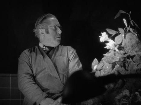 werewolf-of-london-frame-4: Hawkins' owl-like appearance is reinforced by dialogue in the film